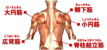 back-muscle-map.jpg